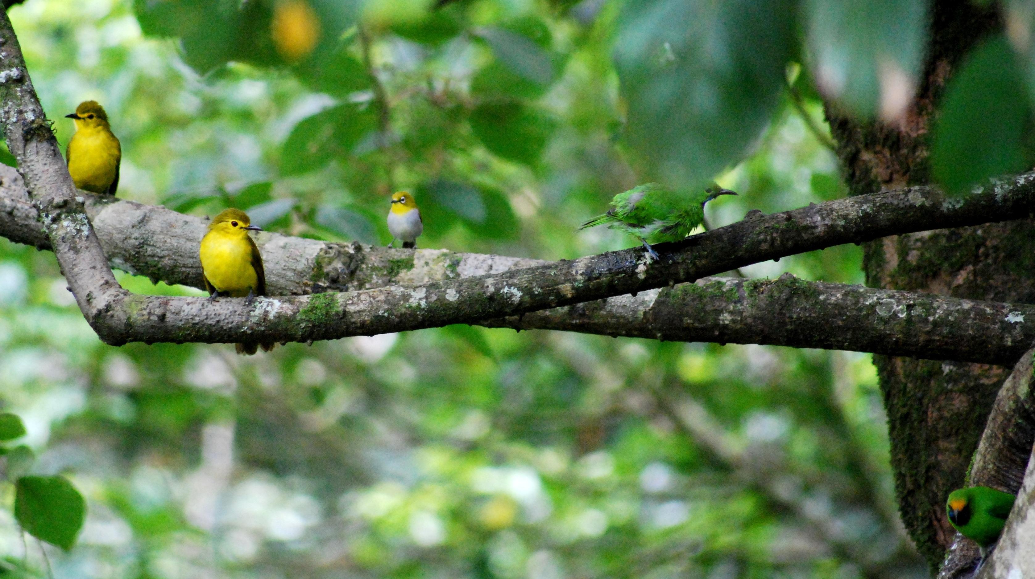 birds- prabu web