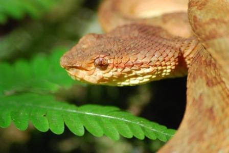 snake 2 prabu web